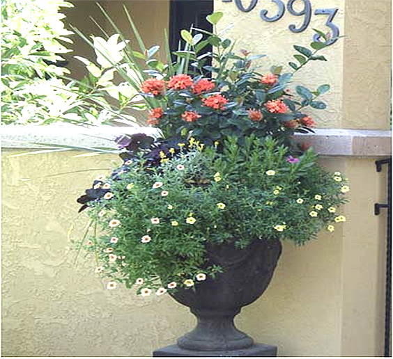 flowerpotaccent