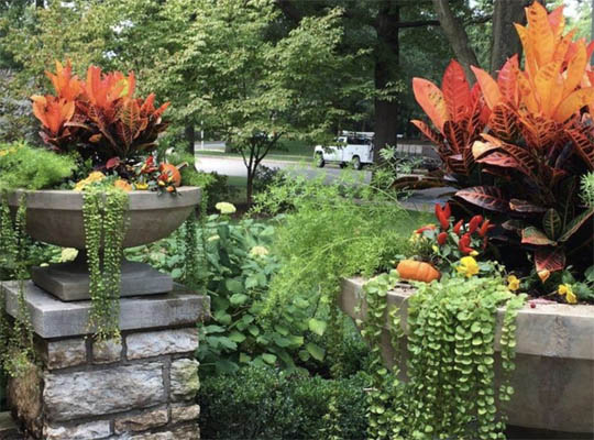 Seasonal beauty and maintenance autumn