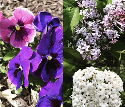 Seasonal beauty and maintenance spring