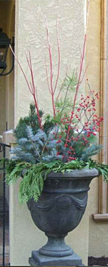 winter planter with evergreen
